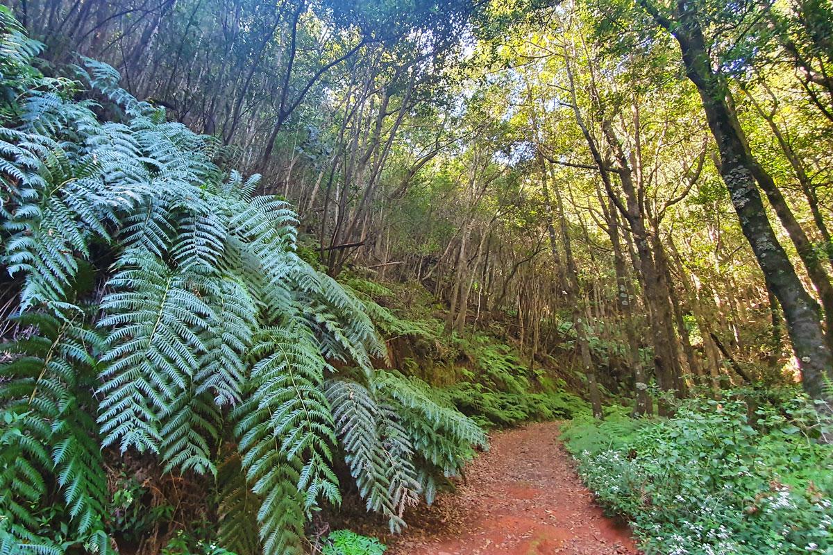 Laurisilva Forest La Palma